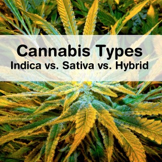 Cannabis Types: Indica vs. Sativa vs. Hybrid