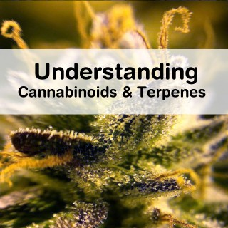 Understanding Cannabinoids and Terpenes